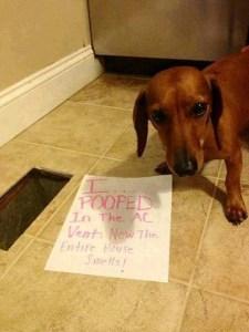 Dog Shaming 2